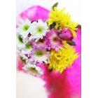 꽃 2462