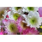 꽃 2458
