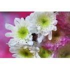 꽃 2457