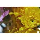 꽃 2454