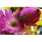 꽃 2452
