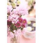 꽃 3187