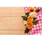 꽃 3463
