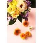 꽃 3389