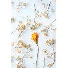 꽃 3316