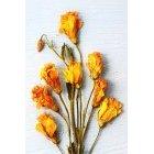 꽃 3315