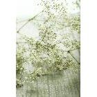 꽃3598